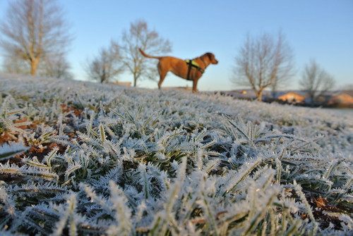 Molly in the frost