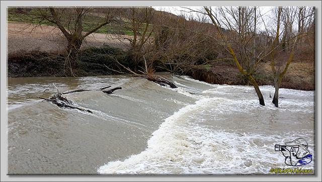 Río Oca a su paso por Briviesca (3)