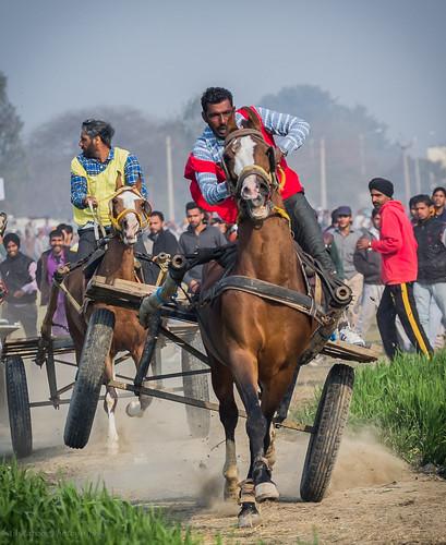 carnival horse india festival race fire olympics cart punjab adrenaline horserace ruralolympics indianculture indianlife cartrace kilaraipur animan indiantradition indiantravel