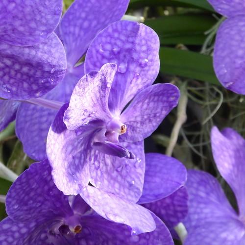 england orchid flower london nature festival kew gardens garden orchids richmond