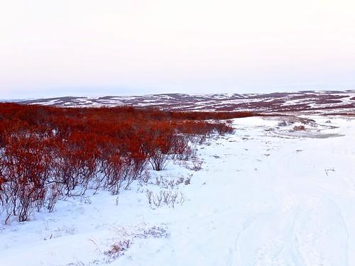 Spring Tundra