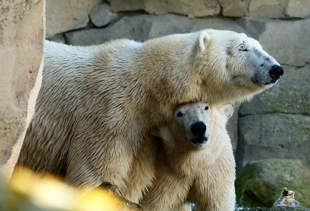 Zoo am Meer 08.03.2015  211