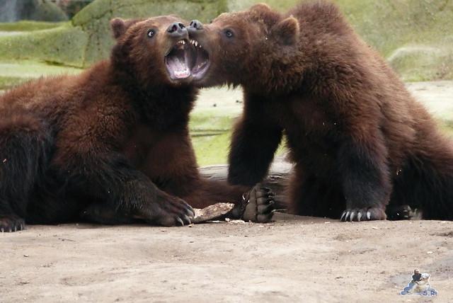Tierpark Hagenbeck 14.03.2015  181