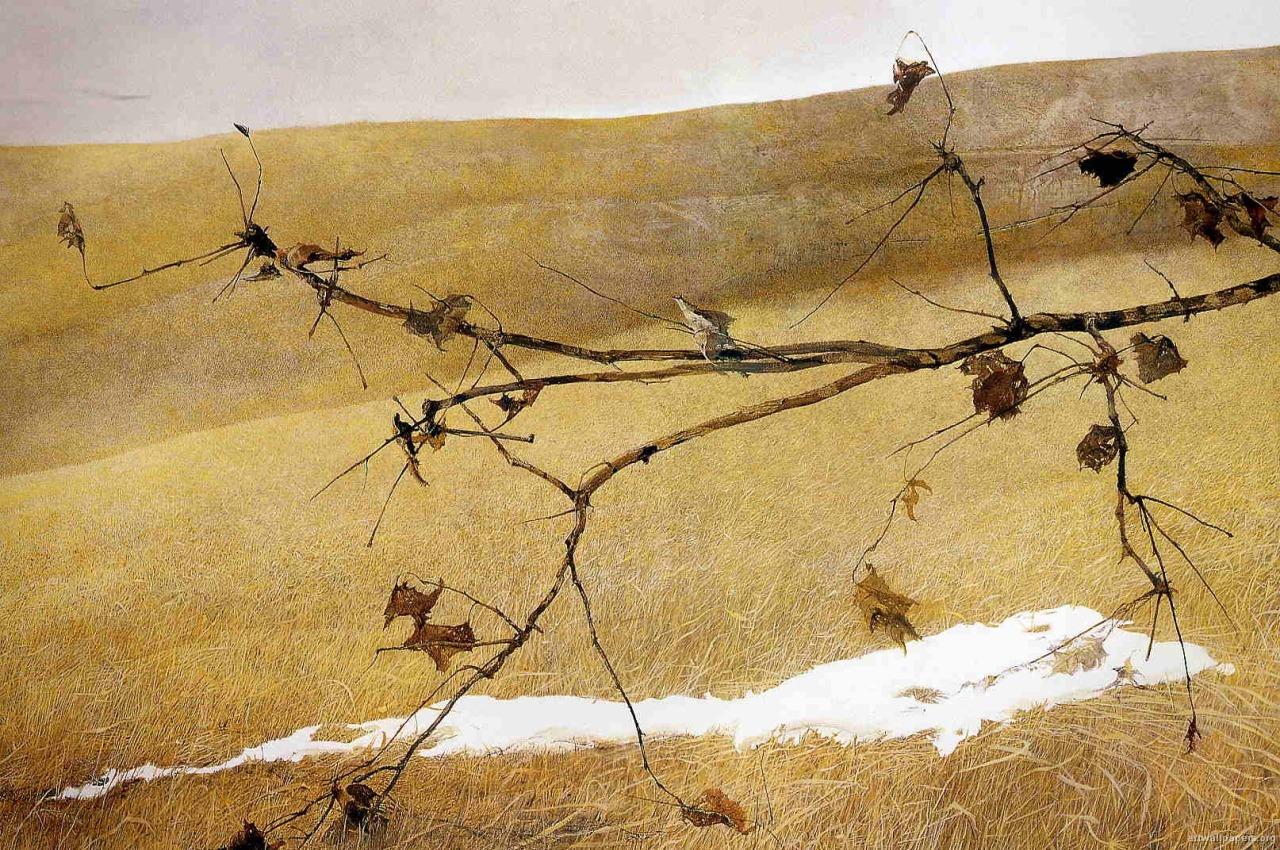 Wyeth13