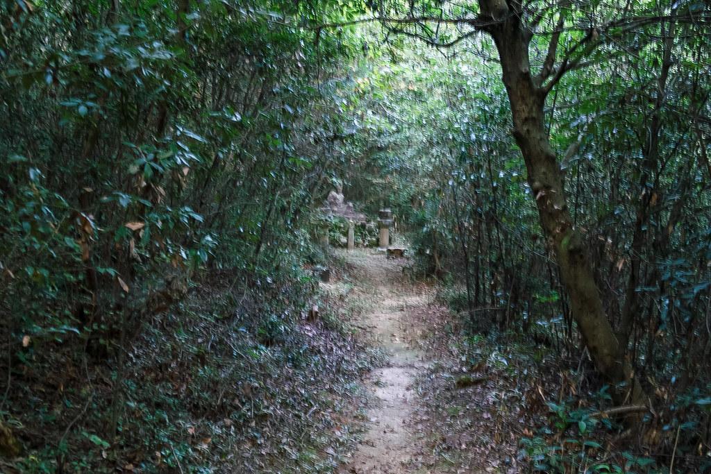 暗い森の中