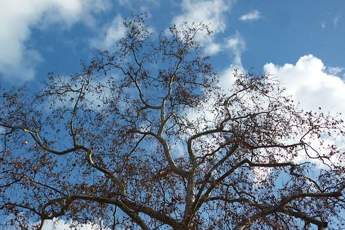 Un albero tra le nuvole