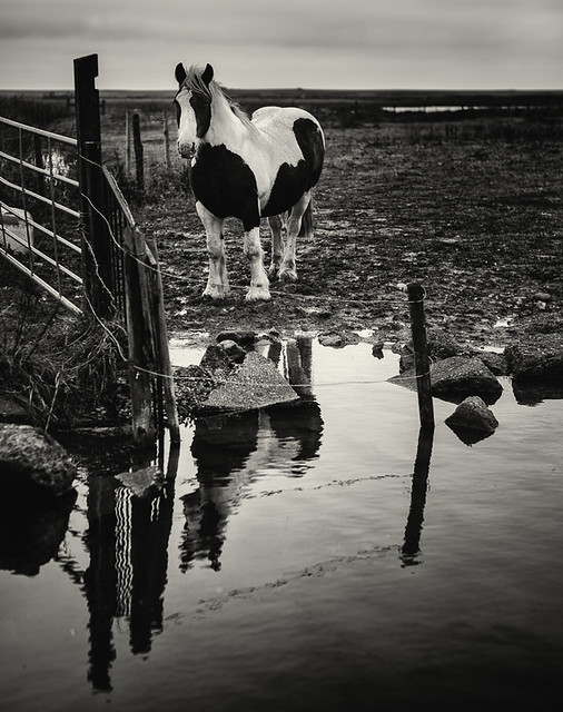 Horse by the pond