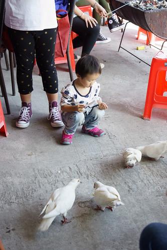 還引來一隻野生的蘿莉來餵鴿...