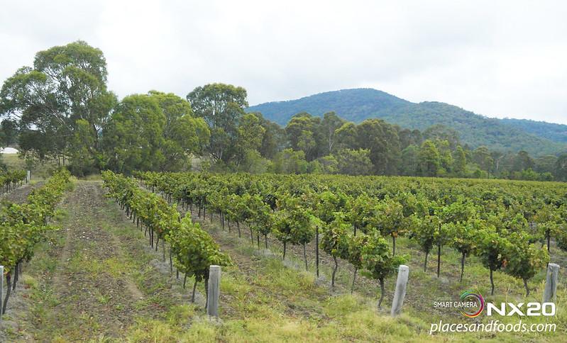 hunter valley wine yards