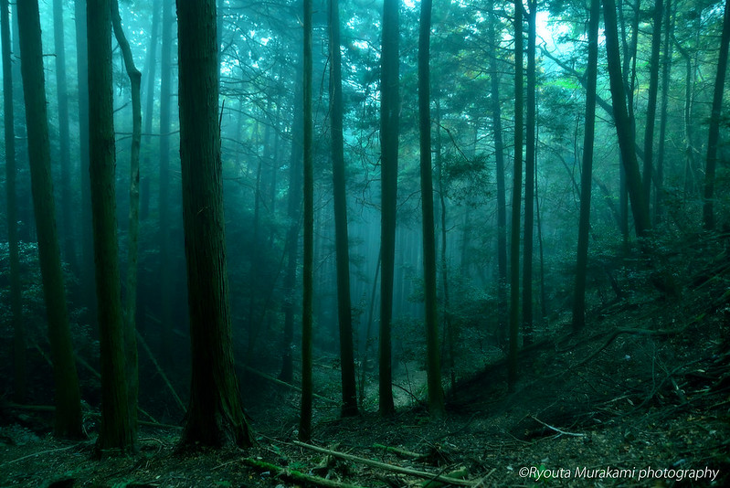 misty_forest5