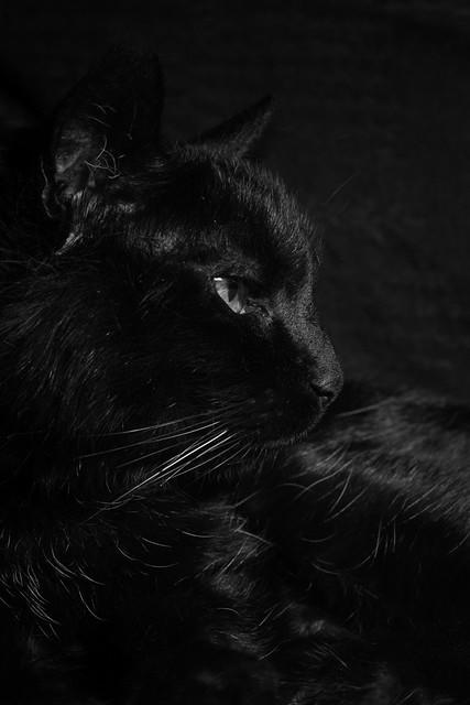 Sarah - black on black