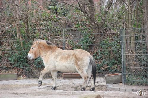 Zoo Berlin 11.01.2015 34