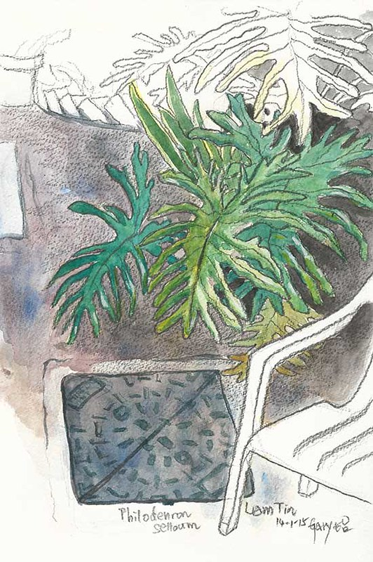 5-Day Sketch Challenge Day 4: Plants Around Me