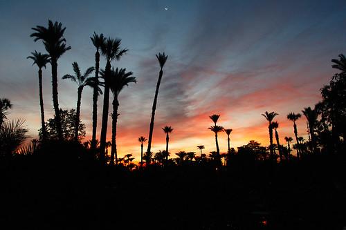 Sunrise in the Hotel Gardens
