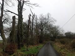 Auchentibber Road