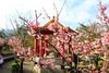 2015 01 25 新北市.烏來.屈尺.仁愛亭.寒櫻(100%-二)