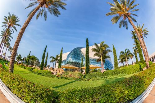 Dali Museum Fisheye through the Palm Trees