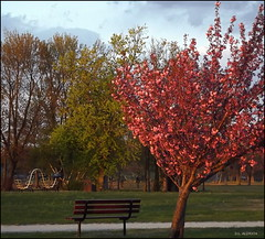 Quiet Hour in the Park