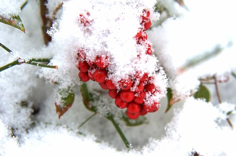 snowstorm_004_2015-02-22_clarity