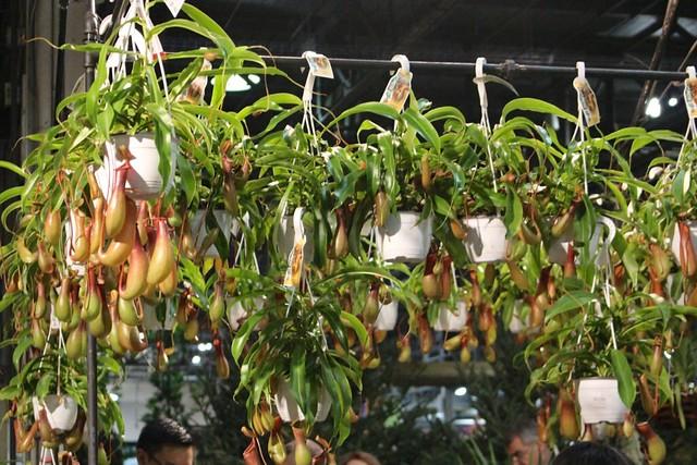 home-show-plants