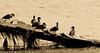 Ducks in sepia by Merrillie