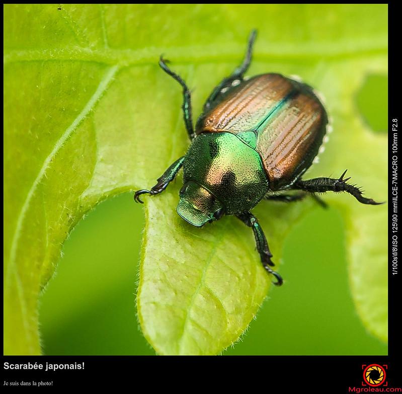 Insectes et autres bibites