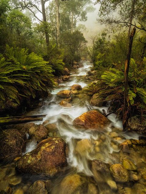 Eurobin Creek -Into the Mist