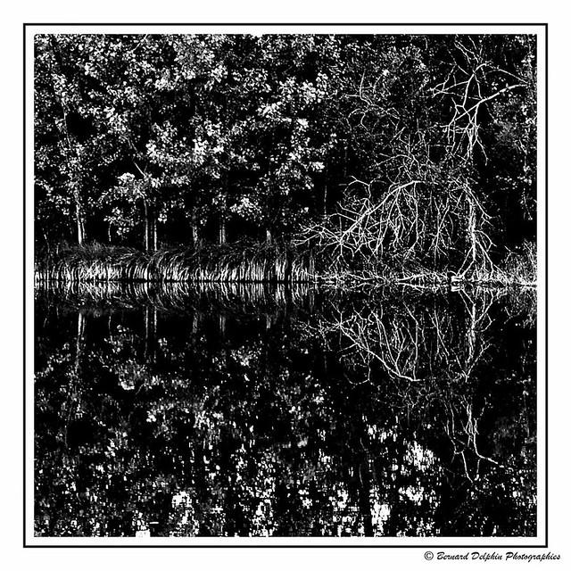 Reflets sur le lac de Remoray (Doubs)