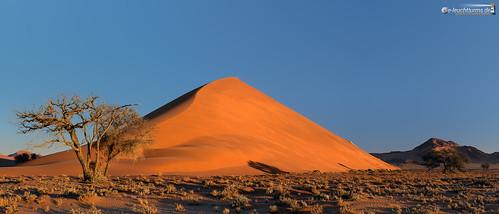 21x9 235x100 7x3 abendlicht africa afrika dune40 dünen hardap kameldorn namib namibnaukluftnationalpark namibia panorama sandwüste sonnenuntergang tsauchabvalley vachelliaerioloba wüste desert eveninglight sanddesert sunset dã¼nen sandwã¼ste wã¼ste hardapregion