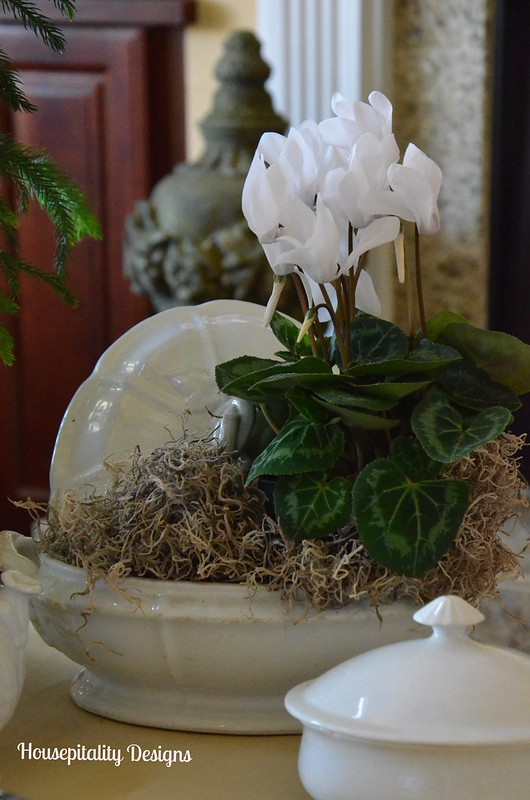 Cyclamen in Ironstone Tureen-Housepitality Designs