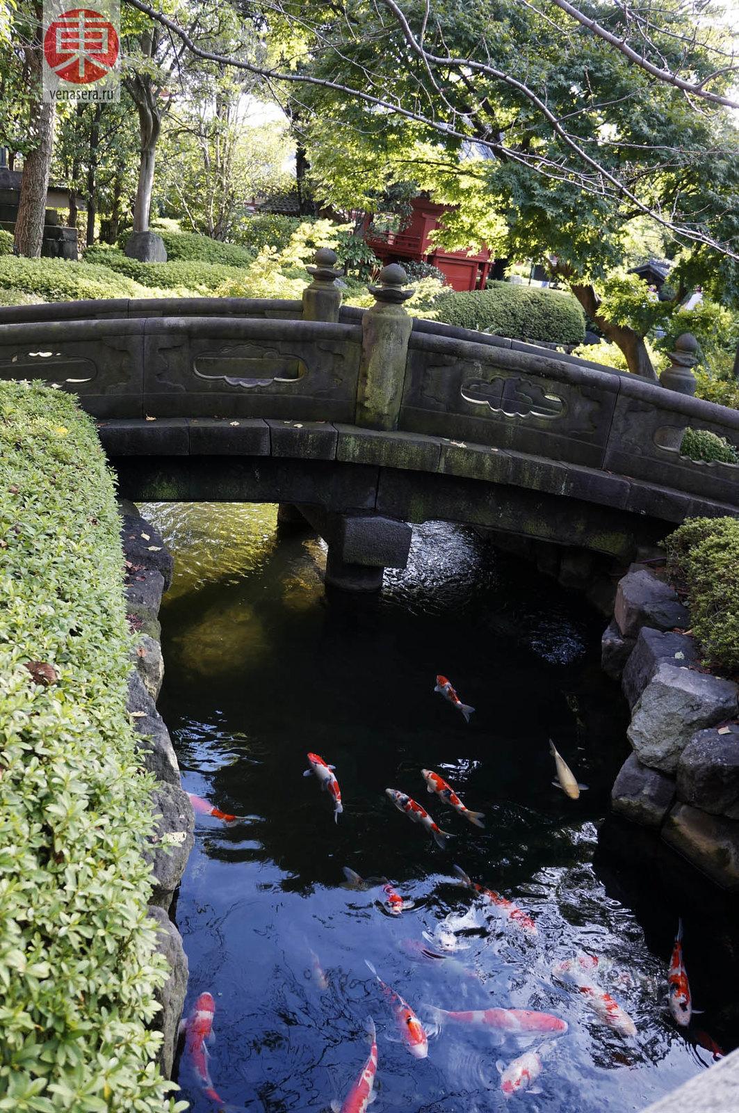 Красивый пруд с карпами в районе Асакуса, Токио.
