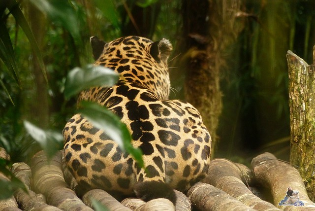 Belize Zoo 19.11.2014 97