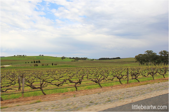 barossa valley-74