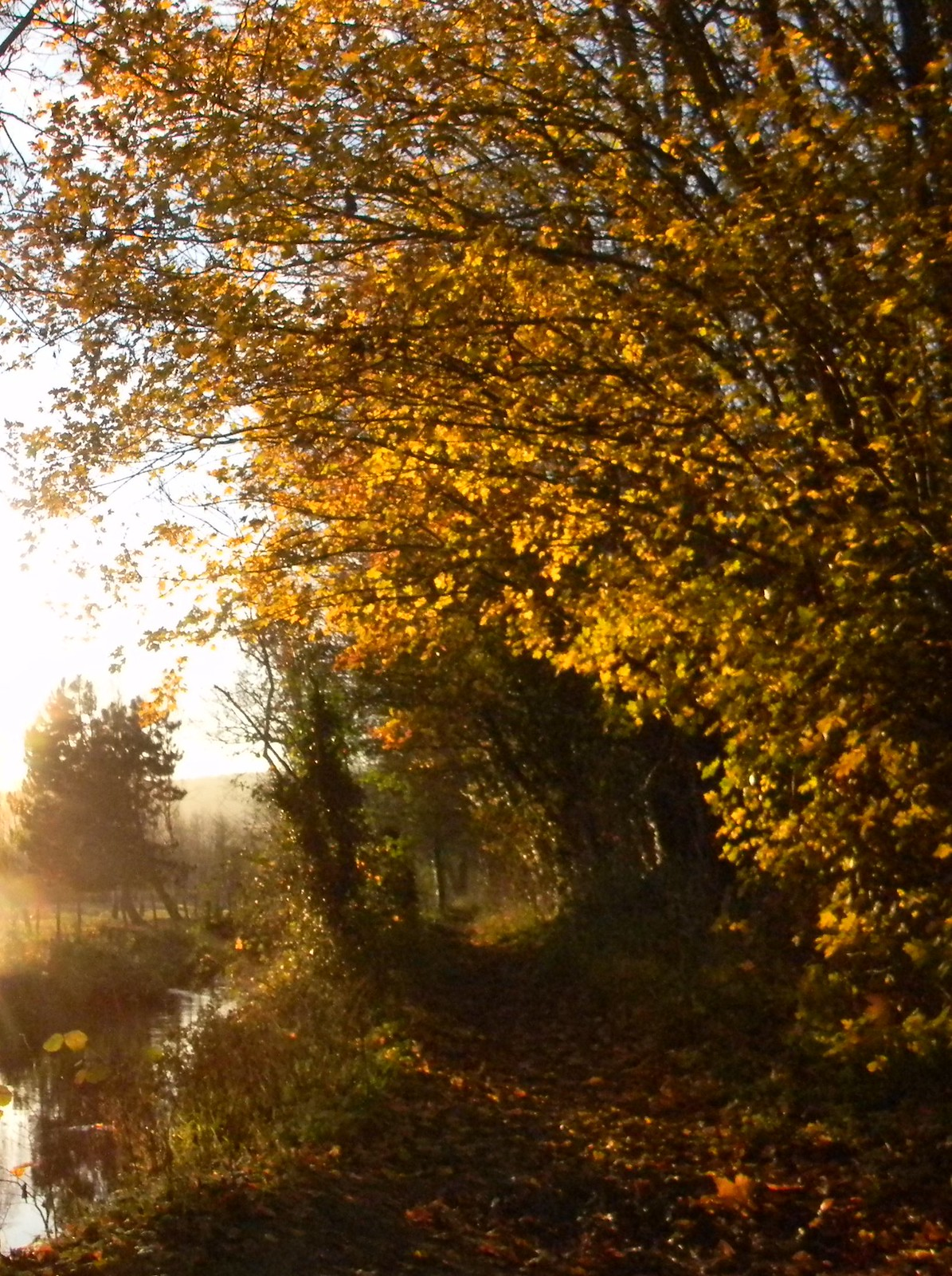 Autumn gold Otford Ciorcular