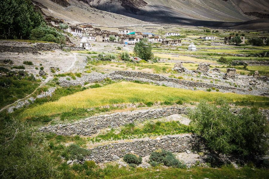 Деревня Эмму, трек к монастырю Фуктал. Долина Занскар (Заскар) © Kartzon Dream - авторские путешествия, авторские туры в Индию, тревел фото, тревел видео, фототуры