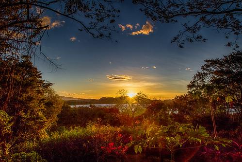 flowers blue trees sky costa sunlight reflection water sunrise bay rica jungle garza