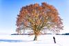 Fotograf und Baum