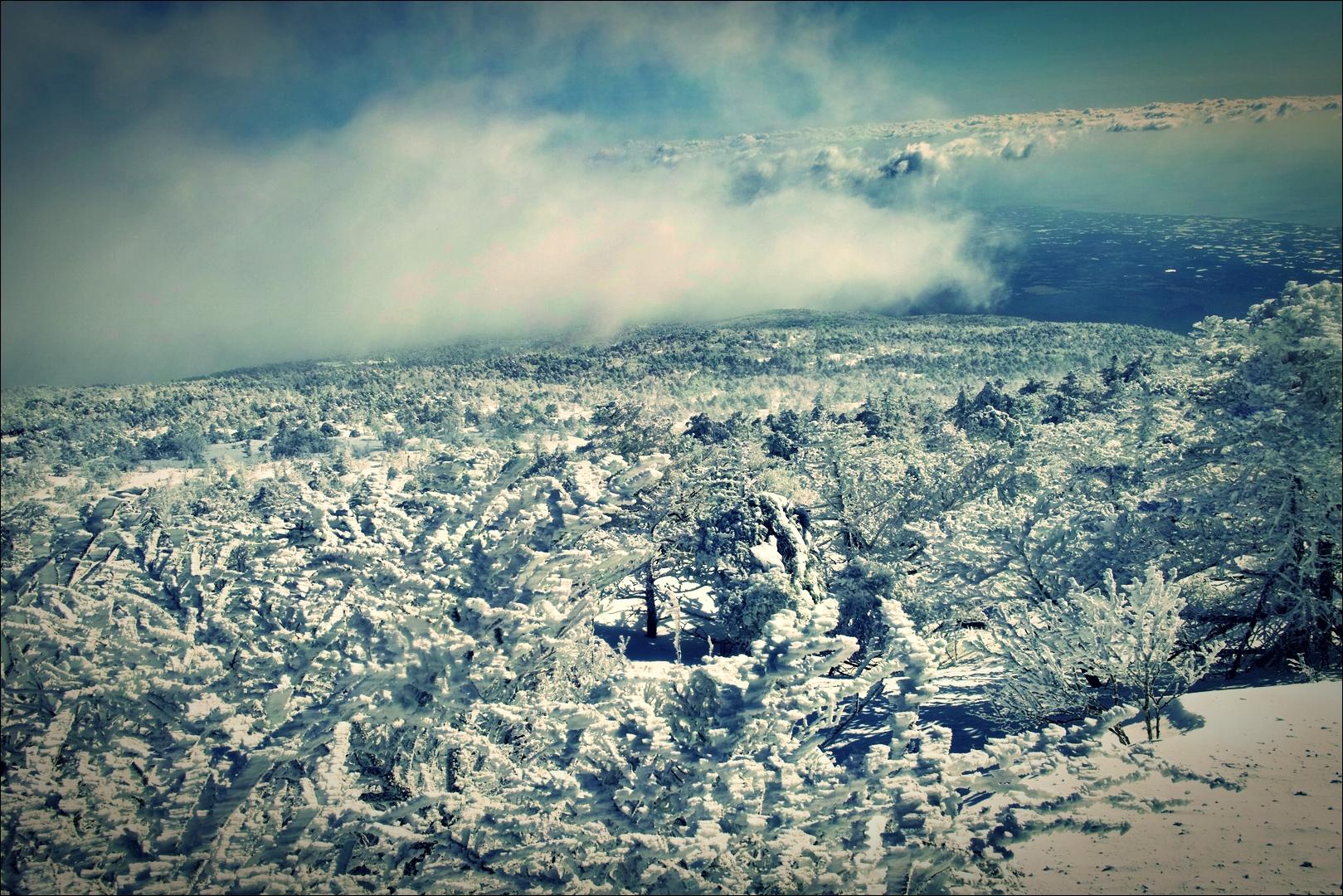 눈보라-'한라산 성판악 - 백록담 겨울 산행.'