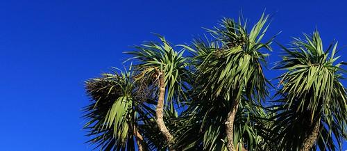 Deep Tropical, Torquay