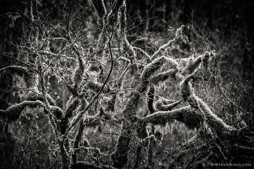 blackandwhite usa nature monochrome forest washington unitedstates northwest pacificnorthwest northamerica washingtonstate tigermountain kingcounty