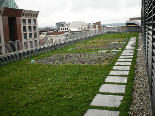 This green roof in Louisville, KY is beneficial in managing rainwater and helps reduce energy costs for the 23 story building. NRCS photo.