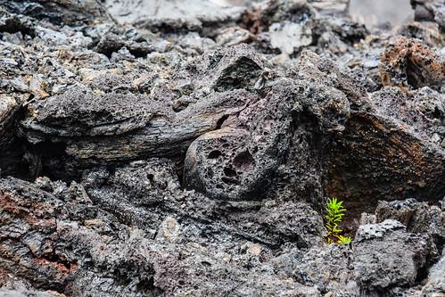 Lava field Big Island Hawaii