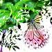 Small photo of Flutter - HSS!
