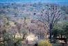 Victoria-Falls-Safari-Lodge-vulture-tree