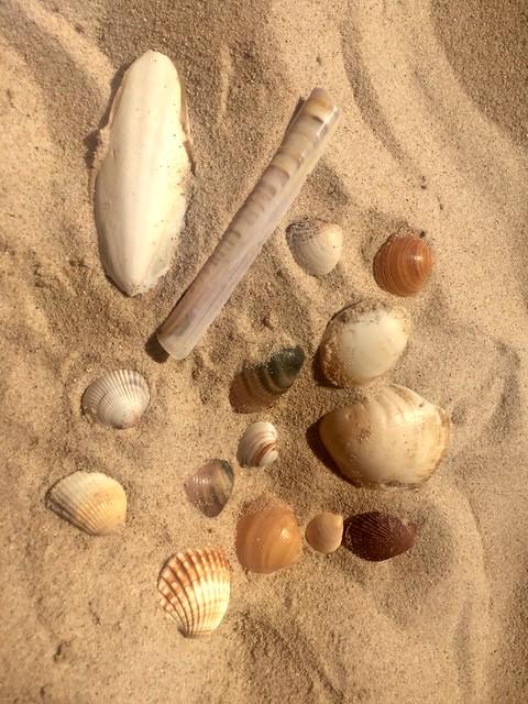 Beach haul