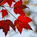 fall colors_2370