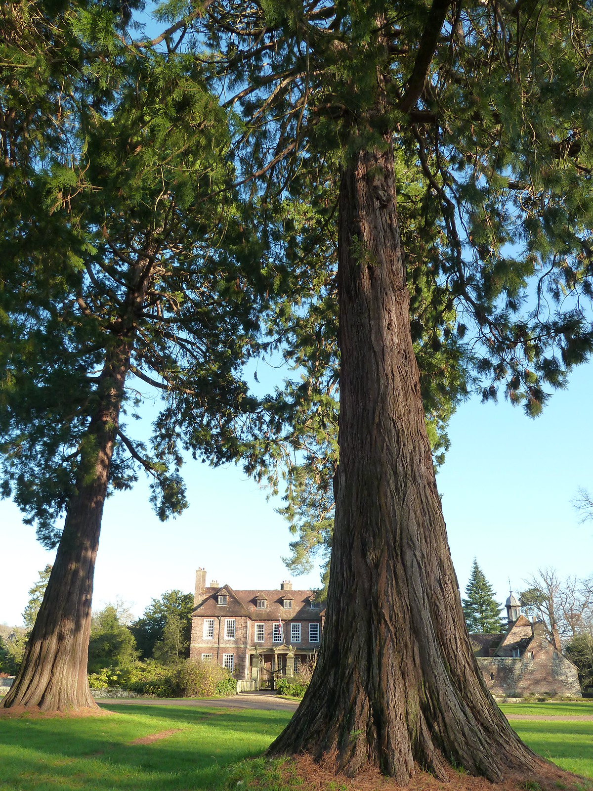 Redwoods at Groombridge (Eridge Circular) 'The existence of a manor at Groombridge was first recorded in 1286 when it belonged to the de Cobhams.' (English Heritage, list entry number: 1000933).