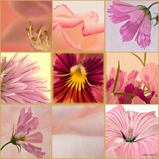 Photo Picture Collage