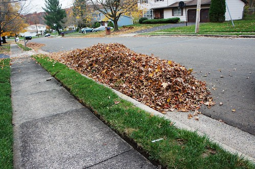 At Home:  Leaf Clean-up 2014