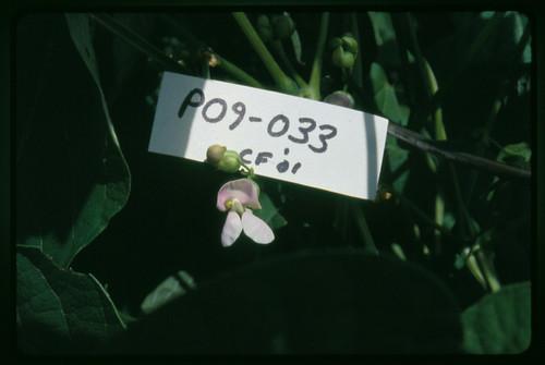 P09-033 CF01 Fl2
